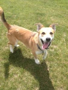 Sanctuary Animal Trotsky | Second Chance Animal Rescue Society