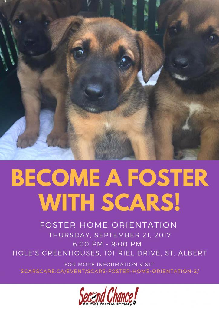 Edmonton Dog Foster Homes