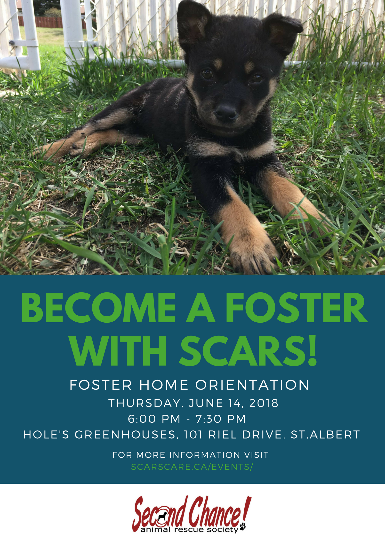 Advertising For Dog Foster Homes